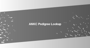 pedigree lookup